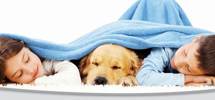 Дети и собака под уютным одеялом дома