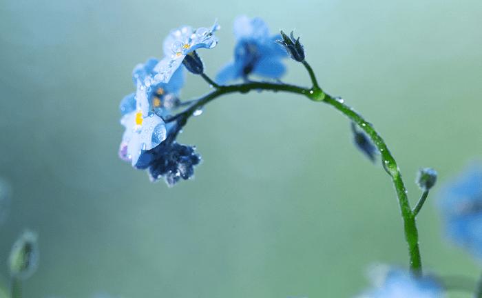 Тропическая влажность и орхидея