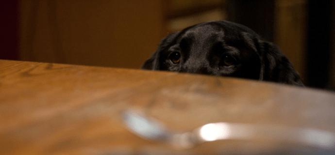 Собака грустно смотрит на стол